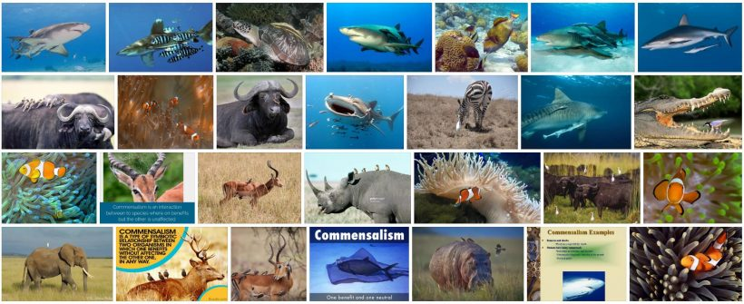 What is Commensalism